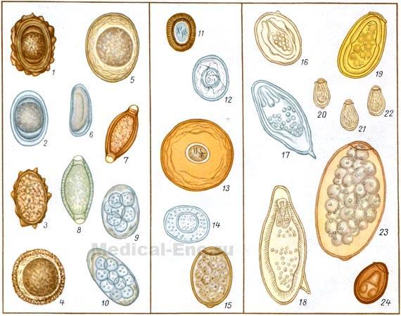 личинки паразитов в кале человека